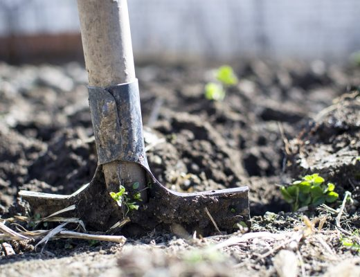 tuinieren voor beginners